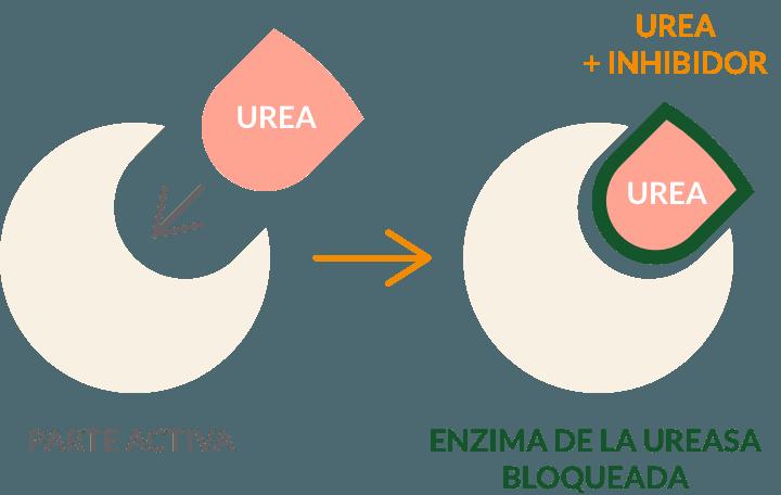 Funcionamiento inhibidor enzima